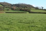 Musbury: towards Sellers Wood