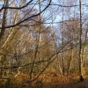 Scrubby woodland on Hamble Common