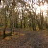 Path through woodland, Hamble Common