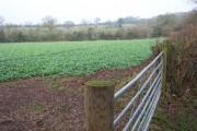 Rape field in the Welsh Borders