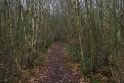 Malthouse Wood