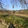 Hewelsfield Common