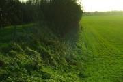 Raised track beside brickfield