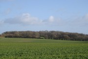 Ashridge Copse from Hyde Farm