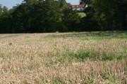 Hatfield Broad Oak across fields