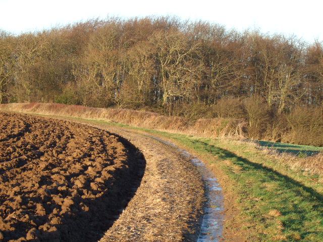 Long Thwaite Wood