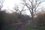Brampton Wood