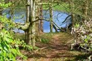 Woodland adjoining Soulseat Loch