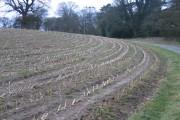 Farmland around Gwysaney