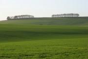 Farmland, Childrey
