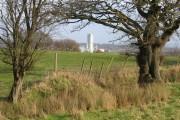 Farmland and field boundary near Stryt-cae-rhedyn