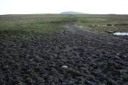 Farm track across a muddy field
