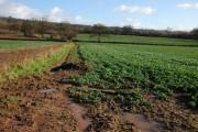 Farmland to the south of Upperton Farm