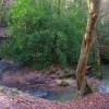 Crowborough Ghyll, Jeffrey's Wood