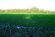 Pellings Wood
