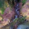 Stream joins Crowborough Ghyll, Jeffrey's Wood