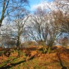 Woodland  by the Sandstone Trail