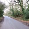 Lane near Piltdown Golf Club