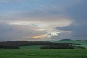 Looking across Salisbury Plantation to Pentridge Hill