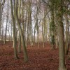 Freehold Wood