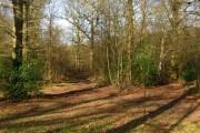 Moat Wood