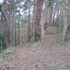 Footpaths through Coed y Cra