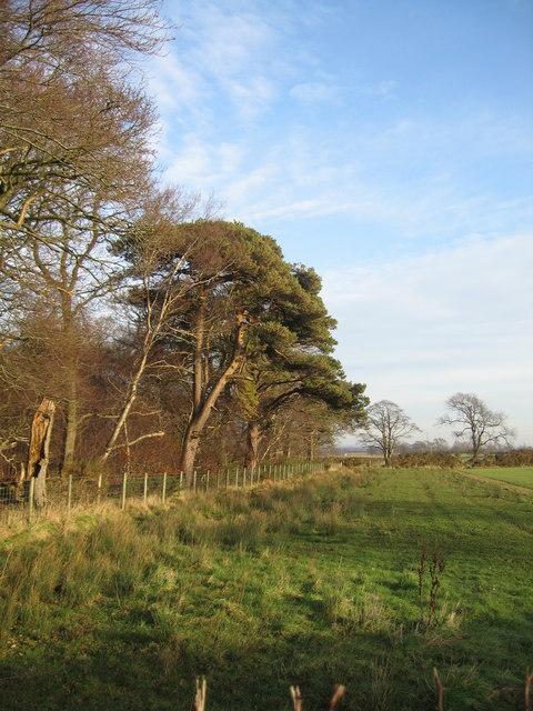 Bensmoor Wood
