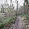 Path Through Lambridge Hill Wood
