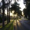 Backlit Trees On Woodland Drive
