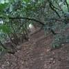 Llwybr Clawdd Wat/Wat's Dyke Way
