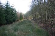 Edge of Raven Wood
