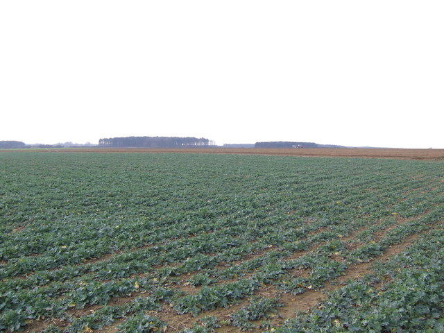 Open farmland west of the B1208