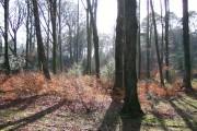 Abbeyford Woods