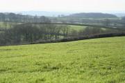 Broadwoodkelly: east of the village