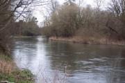 The Wiltshire Avon near Bodenham