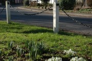 Snowdrops in the centre of Dilwyn