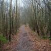 Footpath through Milldown Wood