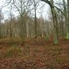 Flatroper's Wood