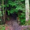 Footbridge over Unnamed Stream, Milldown Wood