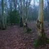 Woodland Boundary, Alder Shaw