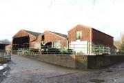 Chillies Farm; afternoon sunshine