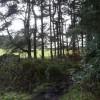 Farley Moor - Woodland  and Field