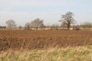 Fields near Yaxley