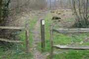 Path through Earley Wood
