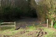 Forestry Track, Brassetts Wood