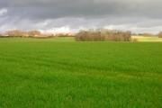 View to Downash Farm