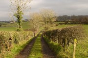 Lane in the townland of Tamnadesse
