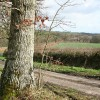 Spreyton: near Deerpark Copse