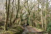 Hittisleigh: lane near Coltsfoot Farm