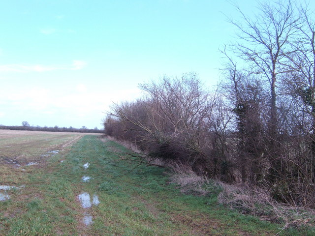 Hedge and field north of Down Ampney